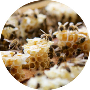 Bienen-kreis